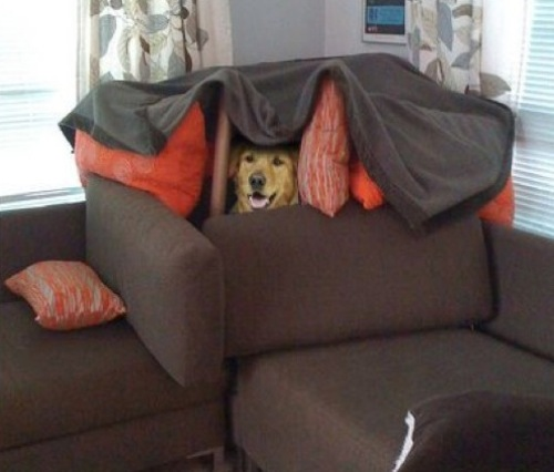 This is dog fort.